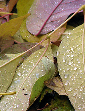 Leaves - Photo by Marg Herder