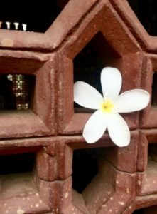 """""""Flower in the Wall"""" - photo by Emmeline Ensign"""