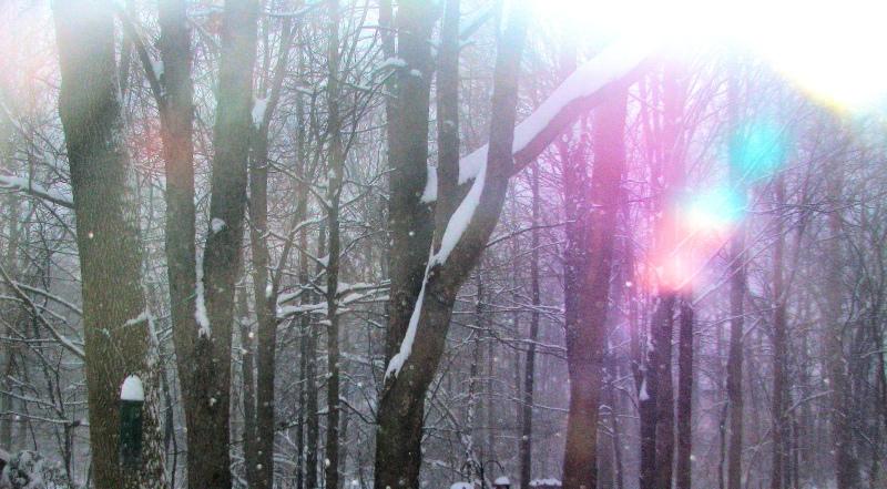 """Winter Light"" Photo by Marg Herder"