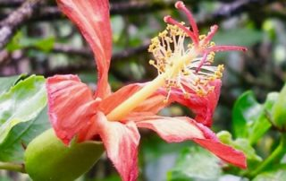 Photo of flower by Diana Ensign