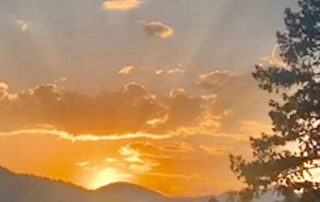 A sunrise in yellows and oranges over the mountains with a pine tree in the foreground, a photo by Emmeline Ensign