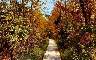Looking down an brick path in the fall with a clear blue sky overhead